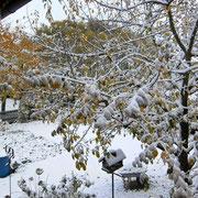 """"""".....und schon Schnee?"""""""