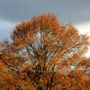 Schön langsam fallen die Blätter von den Bäumen.