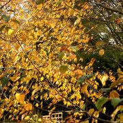 Jetzt kann ich doch noch das Herbstlaub an den Bäumen fotografieren....