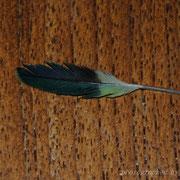 eine kleine Flügeldeckfeder von Frédérique