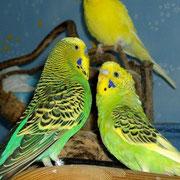 Sunny mit seinem jungen Freund Lemon. Durch Lemons frühen Tod währte die fast väterliche Freundschaft nicht lange.