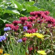 Indianernessel, Kornblumen, Ringelblumen, Sonnenblume