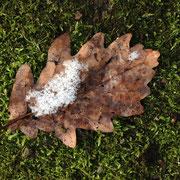 tauender Schnee auf herbstblatt und Moos