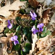 Violette. Foto di Barbara Monti
