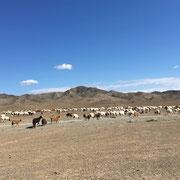 Schaf- und Ziegenherde