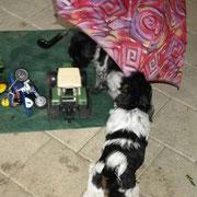 . . . unter dem Schirm sind wir sicher . . .