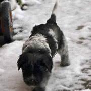 . . . wir sind zwar heute auch nass, aber Schnee ist viiiiil besser als Regen . . .