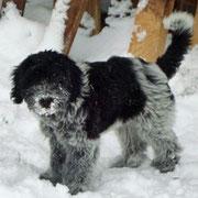Ich liebe Schnee . . .