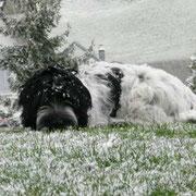 Der erste Schnee – so cooooool . . .