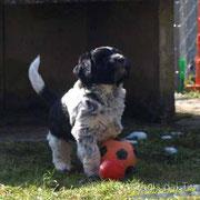 . . . der Ball gehört miiiiir . . .