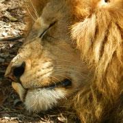 Kruger Park, Sudafrica