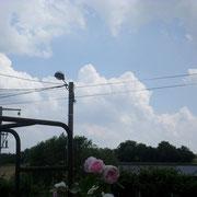 Photo prise à Bainville-Sur-Madon (54)