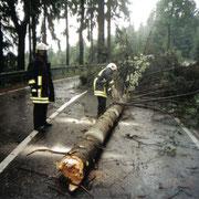 Baum auf Straße  - alte Verbindungsstraße nach Schönheide                                      Foto: B.Seidel