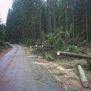Verbindungsstraße von Albertsberg nach Carolagrün nach dem Sturmtief Kyrill                                                                       Foto: B.Seidel