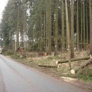 die Zufahrt zum Waldpark Grünheide nach dem Sturmtief Kyrill                                                 Foto: B.Seidel