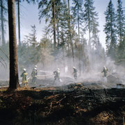 Waldbrand in Vogelsgrün                                                            Foto: B.Seidel