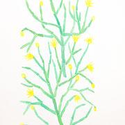 「黄色い花」 Watercolor. 2015 Private collection.