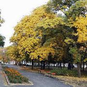 Петровский сквер Таганрог