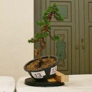 La pianta lavorata da Mauro Brocchieri - Elio's Club che ha ottenuto una menzione di merito