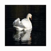 swan lake setkarte 2_14.5/14.5 mit couvert / ©mettler