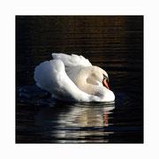 swan lake setkarte 1_14.5/14.5 mit couvert / ©mettler