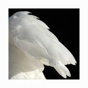 swan lake setkarte 5_14.5/14.5 mit couvert / ©mettler