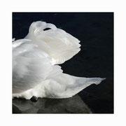 swan lake setkarte 4_14.5/14.5 mit couvert / ©mettler