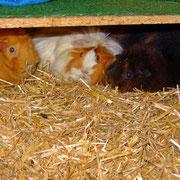 Huch - ein Dreier ^^: Flo, Christl und Yvonne