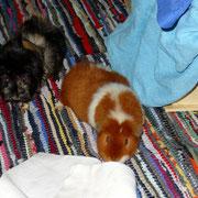 Und während sich Josi und Ursel gerade fragen, warum die 2beiner beim Aufräumen immer soviel Unordnung machen müssen.....