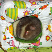 """""""Ah Ruar is!!"""" - Wendi will jetzt nämlich schlafen^^"""