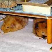 ...schlafen die restlichen Wessis wie z.B. Florian und Hanna eine Runde...