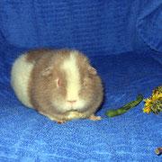Wendi ist ärgerlich, dass die Blume nur zu Dekozwecken da liegt...