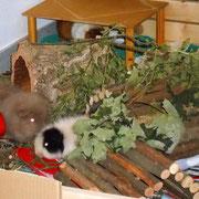 Fabi beim Mauscheln mit Gundel