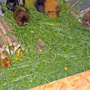 Wendi will sich einen Tunnel durchs Gras fressen...