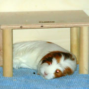 ...Prinzessin Isabella beim Schönheitsschlaf....