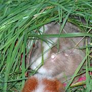 """Wendi hat sich in eine """"Grashöhle"""" zurückgezogen...."""