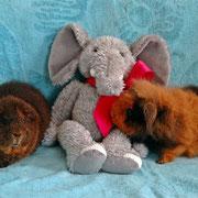 ...dann nimmt Gundel Kontakt mit dem Glückselefanten auf...