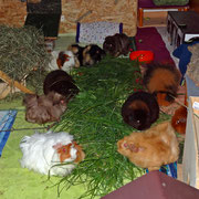 Im Uhrzeigersinn von links: Christl, Bärbel, Zenzi, Isabella, Vroni, Fridolin, Gundel, Xandra, dahinter Lieschen, vorne rechts Flo. Es fehlen Hanna und Yvonne!