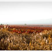 Spanien. Rioja. Vol.01