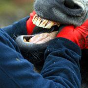 Zahnkontrolle oder noch mehr zu lachen?