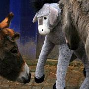 Unser bricklebrit Esel befand sich bald in regem Gedankenaustausch mit seinen Dortmunder Artgenossen.