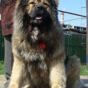 жми на фото  ТАДЖ-МАХАЛ из СТОЛИЦЫ СИБИРИ 23 мес