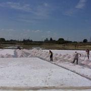 塩採集作業をしている人々