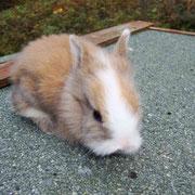 Isi gestorben 8. Dez. 2011