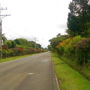 Vor allem im Mai/Juni blühen die Blumen und Bäume an der Ruta de Las Flores.