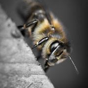 Sei mir gegrüßt, du lieber Mai, mit Laub und Blüten mancherlei! Seid mir gegrüßt, ihr lieben Bienen, vom Morgensonnenstrahl beschienen!