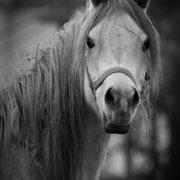 Ein Königreich für den, der mir sagt, was das Pferd von uns denkt.