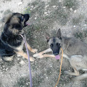 Morita et Skelly
