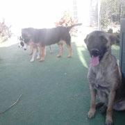 Morita, Landa et Skelly