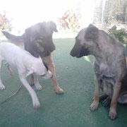 Landa, Morita et Skelly